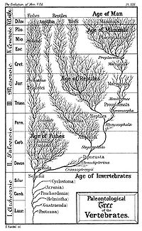 paleontological tree of the evolution of man, reptiles, and fish