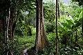 Agroforêts de Tayap.jpg