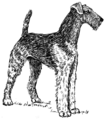 Airedale (PSF).png