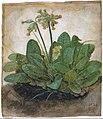 Albrecht Dürer - Tuft of Cowslips - Google Art ProjectFXD.jpg