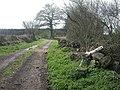 Alderholt, footpath - geograph.org.uk - 1245405.jpg