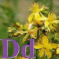 Alfabet roślin - literka D.jpg
