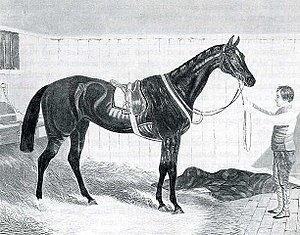 Thormanby (horse) -  Alice Hawthorn. The winner of 52 races and Thormanby's dam