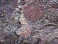 Alluvial polymict conglomerate (Mount Rogers Formation, Neoproterozoic, 750-760 Ma; Fox Creek roadcut, west of Troutdale, Virginia, USA) 81 (30462788836).jpg