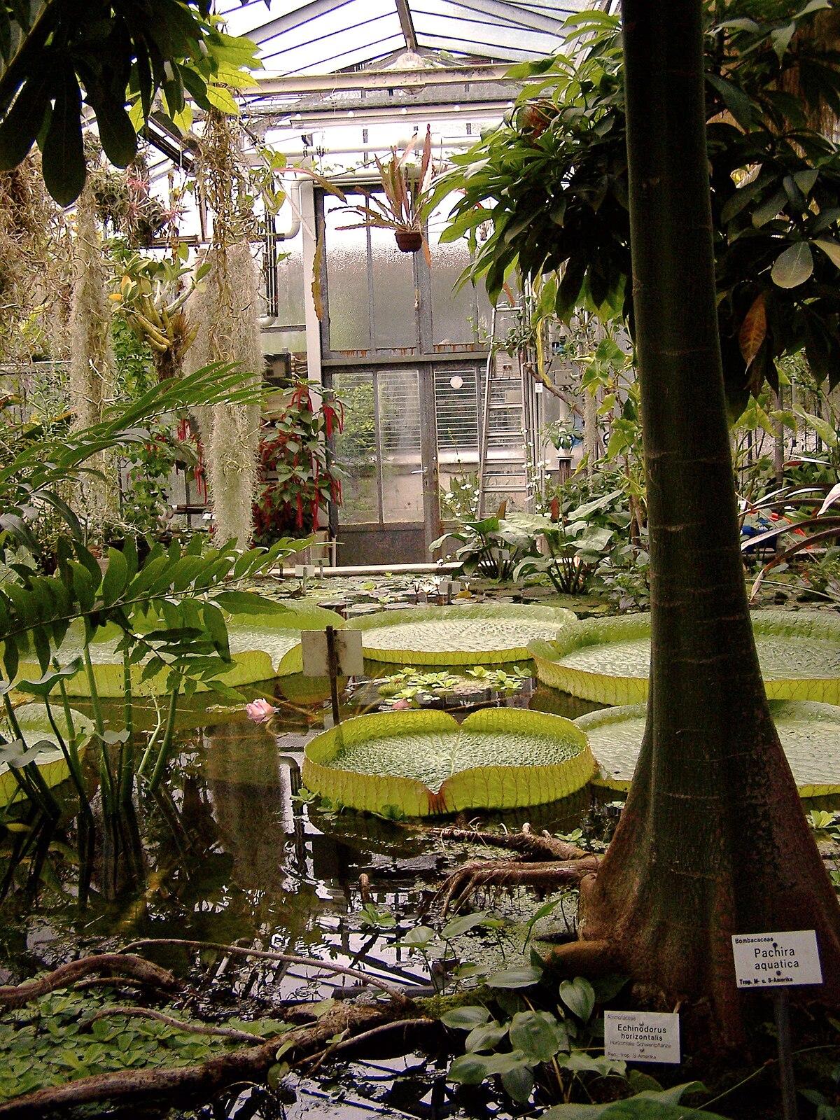 Botanische Gärten Der Georg August Universität Wikipedia