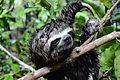 Amazonas, Kolumbien (11557824455).jpg