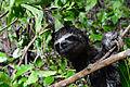 Amazonas, Kolumbien (11558088613).jpg