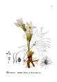 American Medicinal Plants-1-0019-1.png