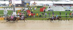 American Pharoah - American Pharoah led throughout the 2015 Preakness, which was run on a very sloppy track.
