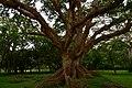 Amora Gedel Park in Hawassa (1) (29101870776).jpg