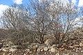 Ancient Shiloh IMG 2955.JPG