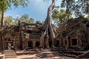Ta Prohm - Spung on a temple in Ta Prohm