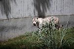 Animais do Zoo passam por exames periódicos (33895079655).jpg