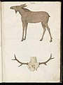 Animal drawings collected by Felix Platter, p2 - (66).jpg
