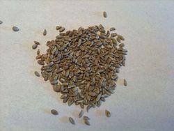 Anise Seed.jpg