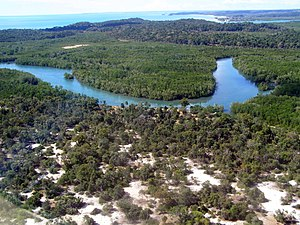 Aerial photo of a coastal forest portion