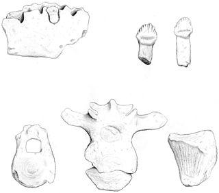 <i>Antarctopelta</i> genus of reptiles (fossil)