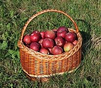 Apples in basket 2018 G1.jpg