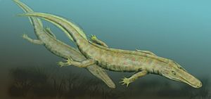 Embolomeri - Restoration of Archeria from the Lower Permian of Texas.