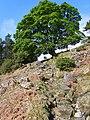 Ascending Armboth Fell - geograph.org.uk - 1284934.jpg