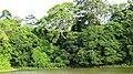 Asurankundu forest and Reservoir - panoramio (2).jpg