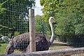 Autruche (Zoo Amiens).JPG
