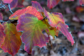 Autumn Leaves 1 NBG.png