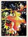 Autumn Transition - Flickr - pinemikey.jpg