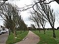 Avenue of Ulmus 'Lobel', Ladies Mile, Southsea, UK.jpg