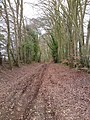 Avenue of beech trees at Broughton Down - geograph.org.uk - 1739491.jpg