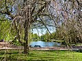 Bad Sassendorf – Teich im Kurpark - panoramio - Edgar El (1).jpg