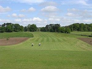 rumput golf untuk lapangan