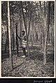 Bamboo Grove in Japan (1914 by Elstner Hilton).jpg