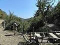 Banat, St.Helena - panoramio (30).jpg