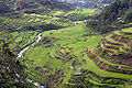 Banaue rice terraces 1.jpg