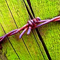 Barbwire - Flickr - Stiller Beobachter (2).jpg