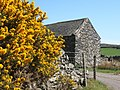 Barn near gorse in full bloom - geograph.org.uk - 540529.jpg