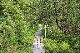 Bayerischer Wald - Großer Filz 001