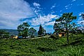 Beauty of ilam image02.jpg