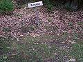 Beelitz Heilstätten -jha- 260072831459.jpeg