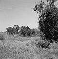 Begroeide oevers van de rivier de Yarkon, Bestanddeelnr 255-4821.jpg