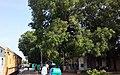 Belagola Township, Mysore, India.jpg