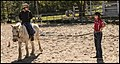 Benjamin at Riding School 5 (29194052521).jpg