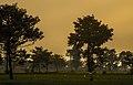 Bentang Sawah dan Pohon di Pagi Hari.jpg