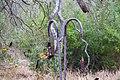 Bentsen-Rio Grande Valley State Park (46186610514).jpg