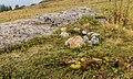 Bergweg van Burleun, naar Ladinas, Andiast. (actm) 12.jpg