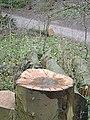 Bestwood Country Park - Birdbath ^ - geograph.org.uk - 658349.jpg