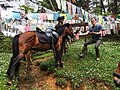 Bhutanese Pony.jpg