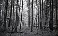 Białowieża forest BW 1991 2.jpg