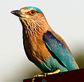 Bird 8087918.jpg